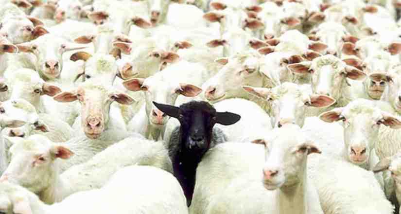 ¿Y si existieran más ovejasnegras?